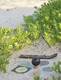 Reiki Initiates World Peace Grid Meditations in the Bahamas