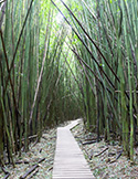 Wisdom from the Bamboo Forest