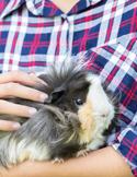 Reiki Helps Animals Transition
