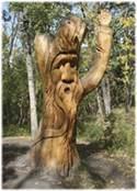Giving Reiki to Trees